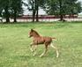 Jodis springer