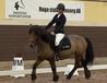 Freja ponny smedstad ridskola