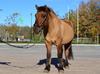 Balou ponny smedstad