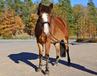 Lindis ponny smedstad ridskola